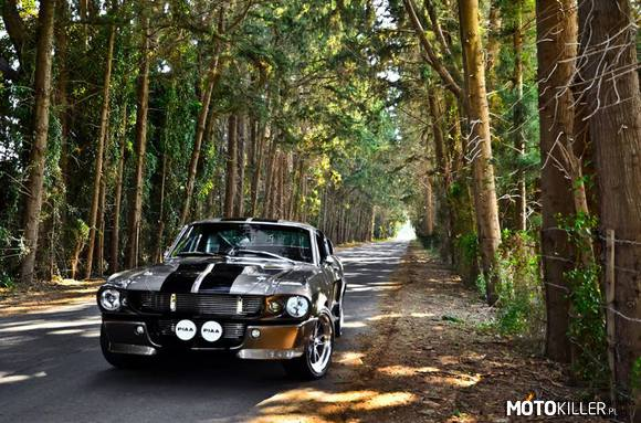 Shelby gt 5000 –