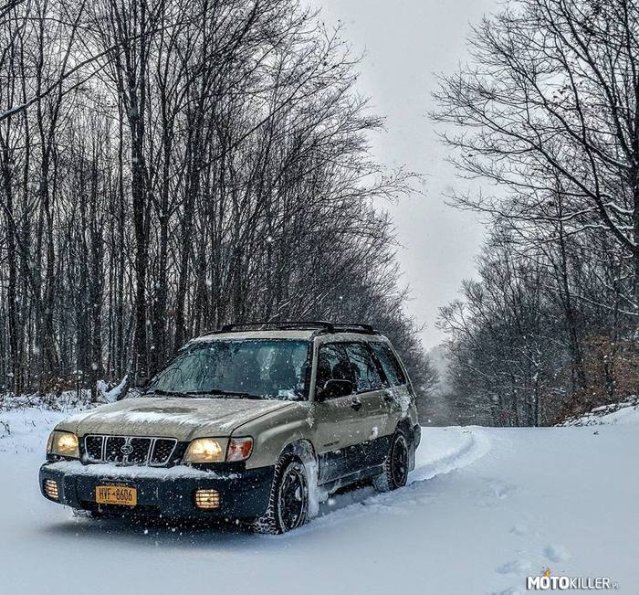 Forester in Forest –